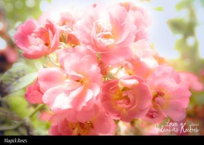 Magick Roses
