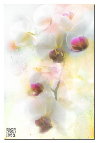 Orchid Abstract