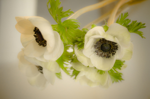 anemone filtred