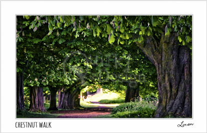 Chestnut Walk
