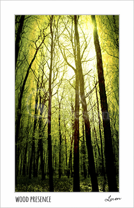 Wood Presence