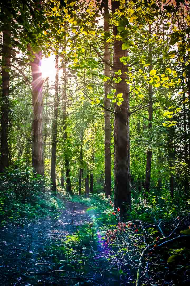 AN ILLUMINATING WALK - Chute Woods, Dunstable, Bedfordshire