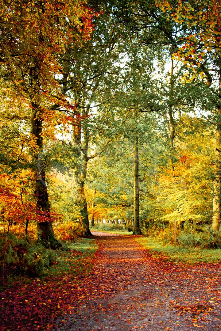 EARTHY CANVAS - A delightful sight of Autumn colours to soak up with the eyes