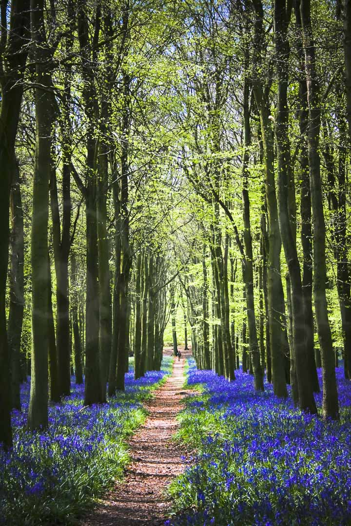 THE PATHWAY - Ashridge's Dockey Wood